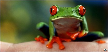 An exotic tree frog