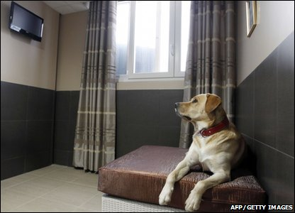 A dog sitting in a room watching TV at France's first luxury hotel for dogs