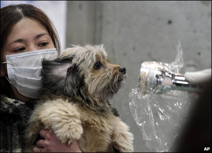 A dog being checked for nuclear radiation