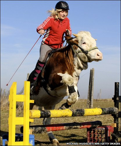 Fifteen-year-old Regina with her show jumping cow, Luna!