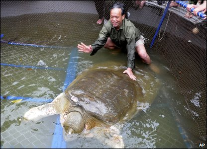 A sick giant turtle has been captured by rescuers in Vietnam to be treated