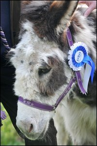 Dotty the donkey. Picture from PDSA
