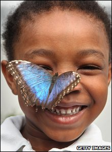 New butterflies will be flown in from abroad each week as the cute creatures have very short life spans.