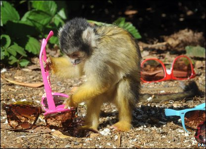 Monkeys have been stealing sunglasses from London Zoo.