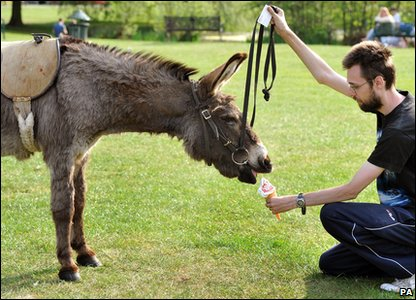 Toby the donkey enjoys an ice cream