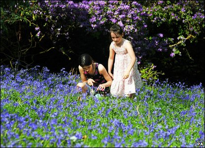 Jessica and Libby play among bluebells at Bowood House in Wiltshire