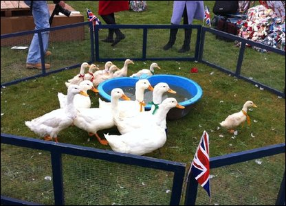 Ducks celebrate the royal wedding