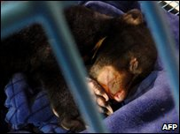 A baby bear sleeps in a cage