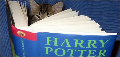 Cat reading Harry Potter book