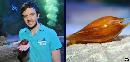 Martin Sutcliffe holding a shark egg found in the ocean tank at Black pool Sea Life Centre and the egg close-up