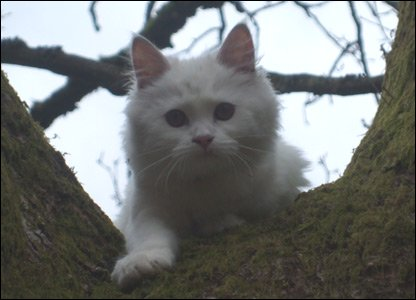 Emily sent us in a picture of her kitten Tinkerbell who loves to climb trees!