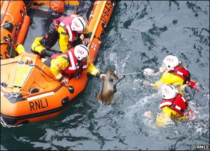 They were then able to safely pull him into their boat and release back into the wild at a nearby bay.