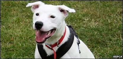 Derek the unlucky dog that's been returned to the RSPCA by three different owners