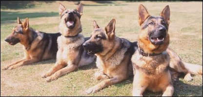 Police dogs - not the ones in the car