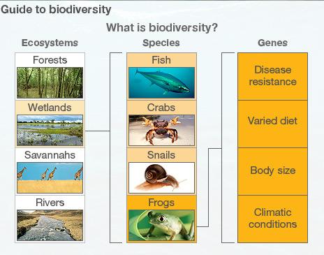 essay on marine biodiversity in india