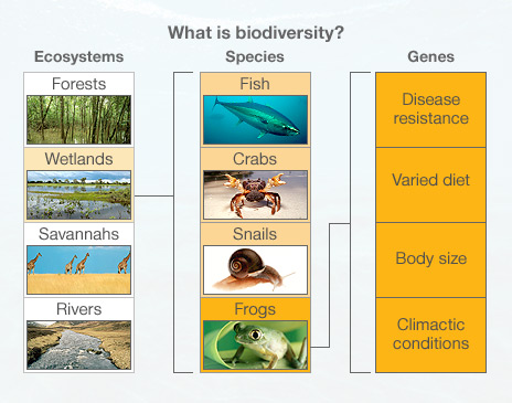 the relationship between species and ecosystems for kids