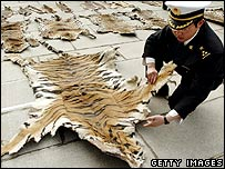 Lhasa Customs officers inspect a piece of tiger skin, 14 June, 2005