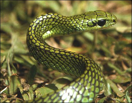 One of two snakes new to science all the new animals were found in a
