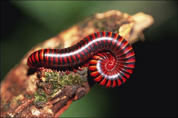 D. Attenborough fotograferar insekter