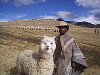 Alpaca farmers of Peru trying to compete