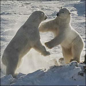 IUCN mengatakan ancaman utama bagi species ini adalah perubahan iklim ...