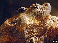 جسدی مومیایی که گفته می شود متعلق به هتشپسوت است