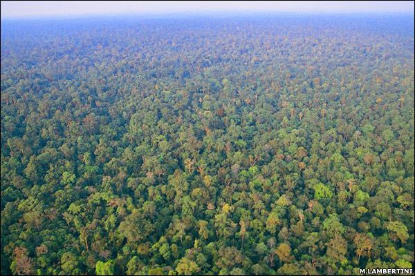 hutan-hujan-indonesia