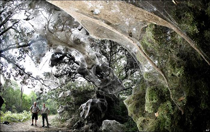 IMAGE(http://news.bbc.co.uk/nol/shared/spl/hi/pop_ups/07/sci_nat_enl_1188552218/img/1.jpg)