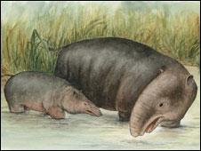 Moeritherium: An ancient amphibious relative of modern elephants