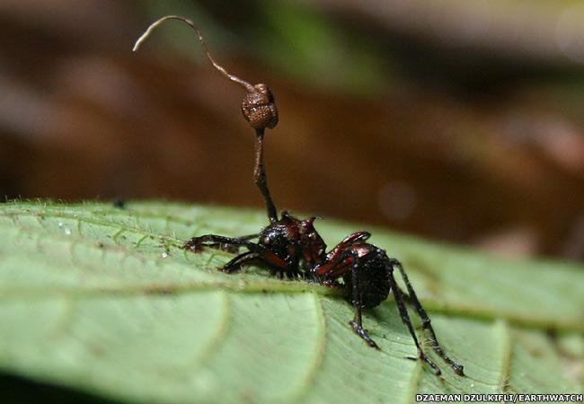 ...на грибах-паразитах, идентифицировал, как укусы муравьев.