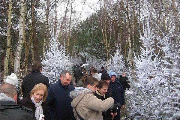 http://news.bbc.co.uk/nol/shared/spl/hi/pop_ups/08/uk_lapland_new_forest/img/2.jpg
