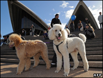 Dogs at the Opera House