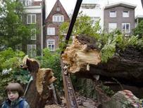 Anne Frank's tree