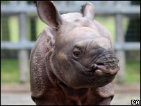 Baby rhino face