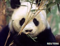 Ming Ming, photographed in 1994 in London Zoo before she moved to a preserve in China