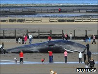 The beached whale in Redcar, England