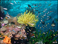 A coral reef in Australia