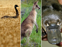 Emu, kangaroo and platypus