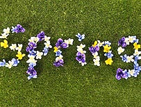 The word spring made out of flowers