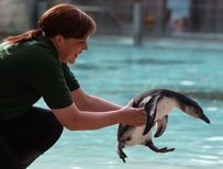 London zoo swot