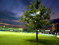 Kent cricket tree