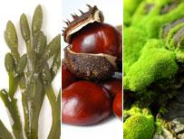 seaweed, conkers, tree moss