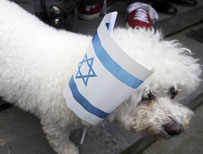 Dog in Israel