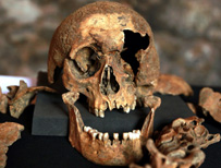 Skull excavated by Crossrail workers