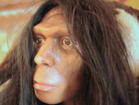 Model of neanderthal man
