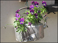 kettle being used as a plant pot