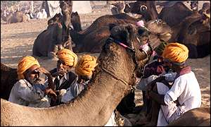 Camel traders