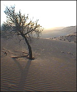 The Empty Quarter in Suadi Arabis