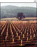 Californian vineyard