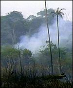 Colombian rainforest BBC